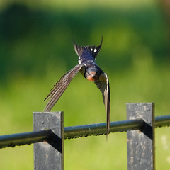 I can almost do a hand stand (Lol never been explored) Tags: bird hff fencedfriday fencefriday