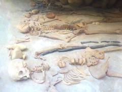 The Remains (Steve Taylor (Photography)) Tags: skeleton bones pot pottery skull britishmuseum museum bowl highkey spooky eerie uk gb england greatbritain unitedkingdom london