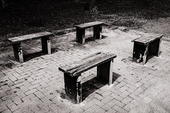 Benches (raymorgan4) Tags: bench seat wooden seats benches wood cardiff roathparklake blackandwhite sunshine contrast