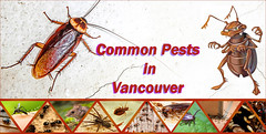 pests in vancouver (vancouverpestcontrolltd) Tags: pest pestcontrol pests wasp wildlife winterpest rodent rat cockroach bedbug bug