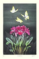Cattleya orchid (Japanese Flower and Bird Art) Tags: flower cattleya orchid orchidaceae kaoru saito modern intaglio print japan japanese art readercollection