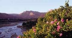 Le paradis marocain avec drogue et vallée des roses au Maroc (Califat islamique) Tags: paradis maroc marocain valléedesroses drogue trafiqantdedrogue islam coran messie jésus musulman hadith califat califatislamique jihad djihad religionmusulmane allah illuminatis