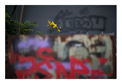 13 [titre 'Blümchenmeister' an Claire] (Armin Fuchs) Tags: arminfuchs lavillelaplusdangereuse anonymousvisitor thomaslistl wolfiwolf blümchenmeister flowers yellow red blue blossoms grey gray grain alterhafen graffiti challenge 35mm green
