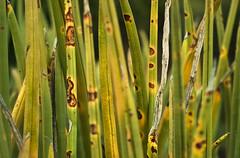 stalky confusion (gnarlydog) Tags: australia plant abstract wabisabi manualfocus vintagelens adaptedlens jupiter985mmf2 bokeh shallowdepthoffield