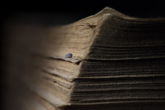 On the shoulders of Giants... (Altazur) Tags: macro book oldbook micronautica microlandscape