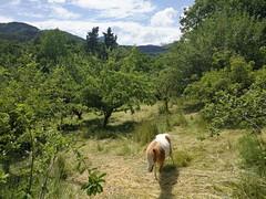 Casi verano (eitb.eus) Tags: eitbcom 30864 g1 tiemponaturaleza tiempon2019 monte gipuzkoa oñati koldomedrano