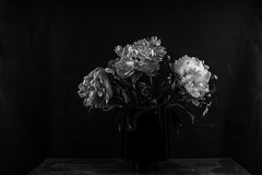 stilleven-9167 (rwscholte) Tags: flowers flash peony pentax pentaxk1 pentaxian groningen glass 50mm fullframe rwscholte ricohpentax strobist lowkey monochrome phottix softbox