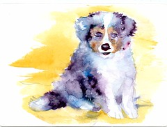 Shetland Sheepdog Puppy-Postcards for the Lunchbag (Life Imitates Doodles) Tags: postcardsforthelunchbag dog puppy watercolro