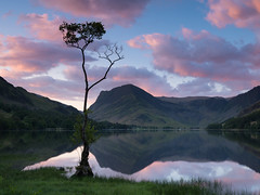 Buttermere Lone Tree  - Paul Turner