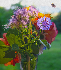 Wiesensträußchen (barbmz) Tags: blumen wiesenblumen straus blumenstraus bouquet bunchofflowers kornblume phacelia