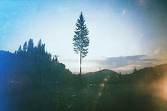 Natura e cambiamento (Mi-Fo-to) Tags: mario rigoni stern dolomiti alberi pini tree landscape landschaft paesaggio fantasia vintage magica luce light magic single singolo