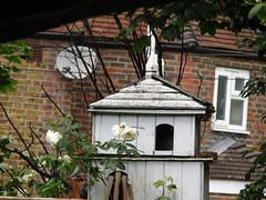IMG_0992 (belight7) Tags: bird house garden home uk berkshire england walk nature