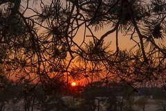 Evening in sand dunes (feisas) Tags: dunes sand trees desert evening park sun sunset orange romantic outdoor landscape camping sonya7 fullframe colorful nature bagus alam bule netherlands tilburg sky vivid alone