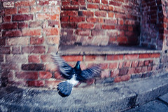 Following a pidgeon (Art de Lux) Tags: holstentor holstengate lübeck germany taube pidgeon tier animal vogel bird tor gate mauer wall backstein brick grau gray rot red unscharf blurred unschärfe blur verwischt olympus bodycaplens mft microfourthirds artdelux