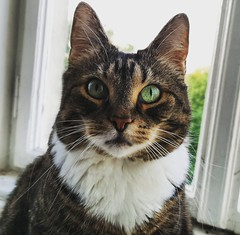 My cat posing... June 4, 2019 (Aris Jansons) Tags: cat pet animal indoors window