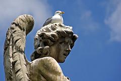Rom, Ponte Sant'Angelo, Engel als Mövenparkplatz (seagull parking on an angel) (HEN-Magonza) Tags: rom roma rome italien italy italia engelsbrücke pontesantangelo engel angel gianlorenzobernini möve seagull rioneborgo