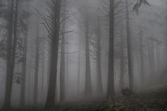 Foggy Forest (Rafael_Santos_7) Tags: forest fog tree nature mist mystery spooky woodland horror landscape outdoors dark autumn season morning scenics lightnaturalphenomenon branch magic fantasy sony alpha a6000 canonfd 50mm