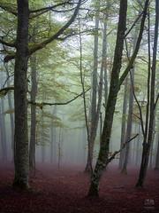 Mystic Forest (Gi Cristóvão) Tags: spain espanha pamplona navarra españa mist fog forest woodland landscape roncesvalles