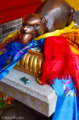 ©Melissa_Donaghue-7501 (daisyvisionxxx) Tags: 2192018 2018 asia china february guangrenlamatemple guangrensi lamatemple pentax pentaxk50 peoplesrepublicofchina shaanxi shaanxiprovince xian xiancity candy hippo hippopotamous offerings statue ©melissadonaghue 中华人民共和国 中国 广仁寺 西安 西安市 陕西 陕西省