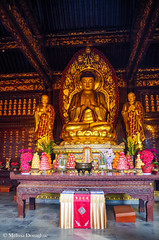 ©Melissa_Donaghue-7400 (daisyvisionxxx) Tags: 2192018 2018 asia buddha buddhism buddhist china february greatwildgoosepagoda pentax pentaxk50 peoplesrepublicofchina shaanxi shaanxiprovince uttarabodhimudra xian xiancity altar gold golden offerings temple ©melissadonaghue 中华人民共和国 中国 西安 西安市 陕西 陕西省