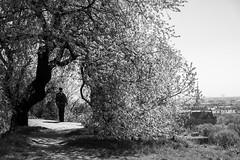 untitled (gregor.zukowski) Tags: gdańsk gdansk street streetphoto streetphotography peopleinthecity candid blackandwhite blackandwhitestreetphotography bw urban urbanlandscape tree fujifilm