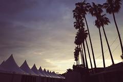 Cannes - 72è Festival de Cannes (sémaphore) Tags: france french riviera leica leicaq q qp cannes festival sunset palm palmier vsco