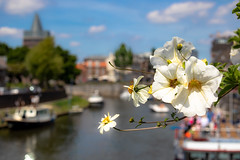 Framed (Carlos Lacano) Tags: flower harbor roermond netherland canon m50 carlos lacano 32mm 14 water holland