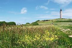 Bas côté (Atreides59) Tags: ciel sky nuages clouds bleu blue nature green vert jaune yellow phare lighthouse fleurs flowers pentax k30 k 30 pentaxart atreides atreides59 cedriclafrance nord
