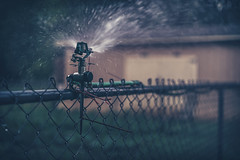 Can you hear it? (Sarah Rausch) Tags: fencefriday sony 50mm 18 water sprinkler garden bokeh