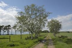 TrackTime (Tony Tooth) Tags: nikon d7100 sigma 1750mm track straighttrack trees gunhill leek staffs staffordshire england countryside