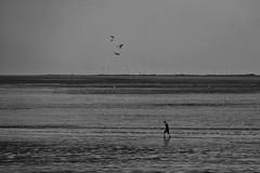 Silt Skating and Duck Racing (RadarO´Reilly) Tags: dangast germany jadebusen nordsee northsea ebbe lowtide watt mudflat küste coast sw schwarzweis bw blackwhite blanconegro monochrome noiretblanc zwartwit