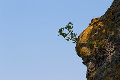 Lumpy Trunk (Epochend) Tags: sweden tree trunk lump bark moss growth plant sky