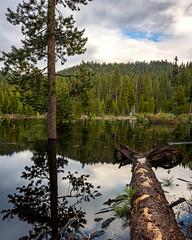 Tahoe Marshland