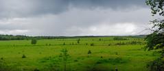 Lush (jbinpg) Tags: lushgrassland wrightcreek princegeorge bc canada