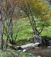 Cozy corners in my heart (lebre.jaime) Tags: japan 日本 kawabamura 川場村 creek tree grass stone analogic film120 mf mediumformat kodak ektacolor gold iso400 egp3 hasselblad 503cx planar cf2880 epson v600 affinity affinityphoto