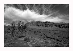 Capitol Reef Vista (www.halkaphoto.com) Tags: usa americansouthwest utah capitolreef nationalpark desert desertplants arid sandstone rocks redrocks nature landscape tree clouds vista panorama view bw monochrome