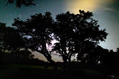 Distant Storm (J H Newton Images) Tags: sky nightsky stars storm sihlouette texas liveoak