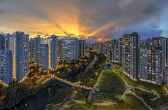 Crepuscular Rays SunSet @ Punggol Heart❤️land, Singapore (gintks) Tags: gintaygintks singapore singaporetourismboard singapur hdb publichousingestate punggol crepuscular sunset sunsetglow sky fire epic clouds water reflection green tree bridge vibrant sunsetrays