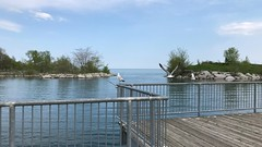 """""""A good snapshot keeps a moment from running away."""" ― Eudora Welty (Trinimusic2008 -blessings) Tags: trinimusic2008 judymeikle nature fence hff spring toronto to ontario canada waterfrontrecreationaltrail asharedpath mimico sky lake lakeontario gratitude may 2019"""