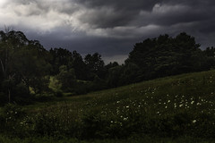 Summer Storm Warning (jessicalowell20) Tags: black clouds field flowers forest gray green maine moodysky newengland northamerica rural shrubs storm summer trees white woods yellow