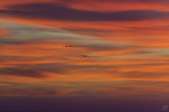 Three Little Birds (waves_and_wonders) Tags: art background beautiful beauty birds california clouds colors fineart gold goldenhour heavenly light lowclouds minimalist moodysky nature painterly photography pink seabirds seagull sunset