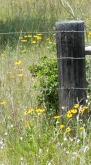 Just Another Friday Fence Post .......   HFF (~ Cindy~) Tags: barbedwire fencepost fence greenery field wildflowers tennessee