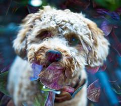 Flower Dog (Peter Branger) Tags: twoinone flora fauna dog plant nature laika smileonsaturday