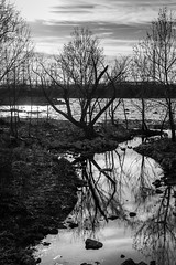 before the flood (fallsroad) Tags: gatheringplace tulsaoklahoma arkansasriver riversidepark water sky clouds sunset goldenhour blackandwhite bw monochrome tree trees landscape