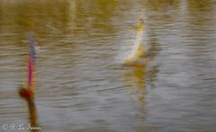 Quelques vaisseaux fantômes sur des océans imaginaires.-9530 (letexierpatrick) Tags: mémoires bateaux boat bassin eau flou rêverie jardin paris france europe extérieur explore colors couleurs couleur nikon nikond7000