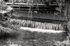 Ampney Brook (phileveratt) Tags: ampneycrucis ampneybrook gloucestershire fencefriday fencedfriday happyfencefriday hff brook stream water