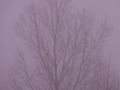 it was 8:18 AM... on November 10, 2018 (SheilaMink) Tags: tree branches leaves fog foggy gray black shapes spaces gaps morning november newmexico southwest sooc nopostprocessing 157301