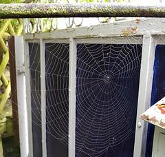 beinahe perfekt (claudine6677) Tags: spinnennetz radnetz spider web nature spiders spinnweben spinnen