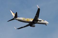 タイガースジェット B737 スカイマーク (kasa51) Tags: airplane aircraft jetplane hanshintigers tokyo japan タイガースジェット b737 スカイマーク トラッキー