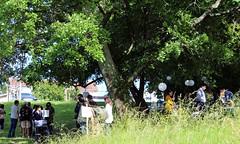 L'inauguration de l'éco-pâturage au Parc Rozin, à Bassens